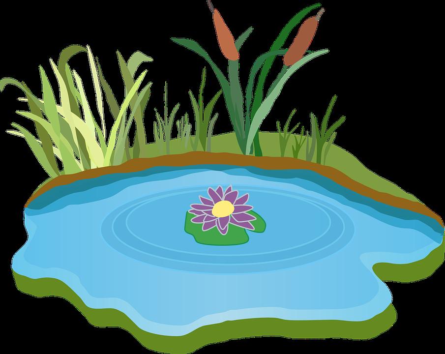 Sur un étang, il y a un nénuphar, chaque nuit, le nombre de nénuphars double. Après 30 jours l'étang est remplie de nénuphar. Après combien de jour l'étang est-il à moitié remplie de nénuphar?